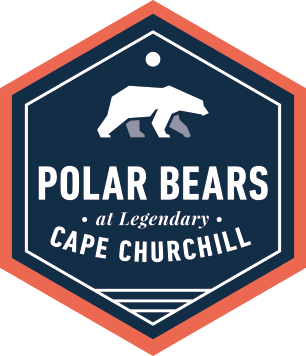 Polar Bears at Legendary Cape Churchill