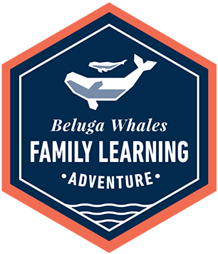 Family Learning Adventure: Beluga Whales
