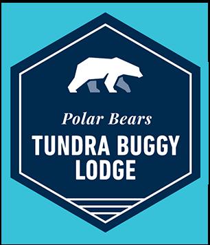 Polar Bears at Tundra Buggy Lodge