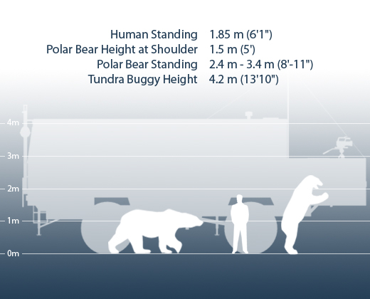 [Image: tundra-buggy-height-comparison-chart.png]